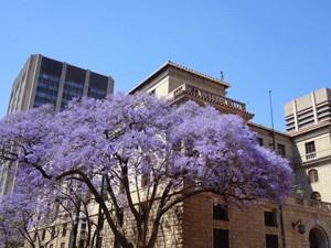 Südafrika - Pretoria - Nordosten Südafrika