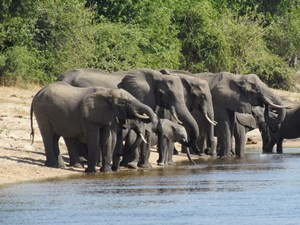 Botswana - Chobe Nationalpark - Elefanten am Fluss
