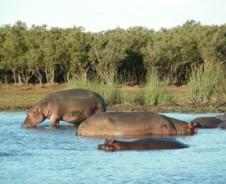Bootsafari zu den Flusspferden in St. Lucia