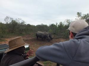 Pirschfahrt im Mkhaya Game Reserve