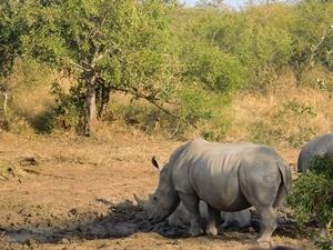 In Südafrika malariafrei auf Safari gehen