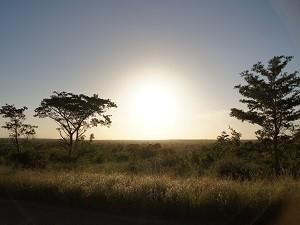 Sonnenuntergang im Busch
