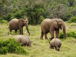 Elefanten Port Elizabeth Sibuya Privatreservat