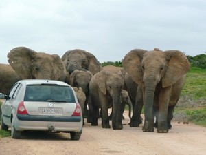 Addo-Elephant-Park Safari Garden Route