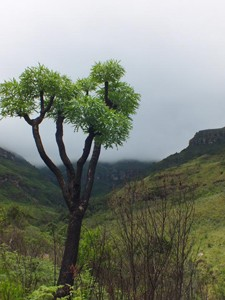 Südafrika - KwaZulu-Natal - Drakensberge