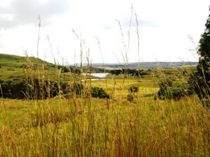 Ausblick auf die schöne Landschaft in Dullstroom