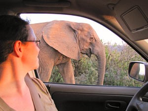 Südafrika - Addo Elephant Park - Safari