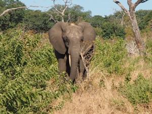Auf Safari im Chobe Nationalpark