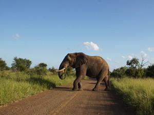 Südafrika - Safari - Krüger Nationalpark - Elefanten
