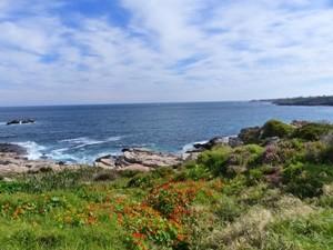 Weg entlang der Küste von Hermanus