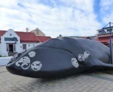 Wale in Hermanus