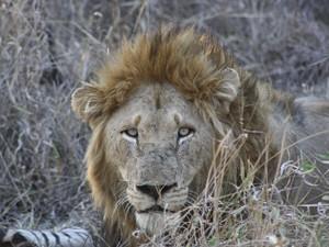 Auf Safari im Moremi