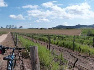 Südafrika-Radtour-durch-die-Weinberge