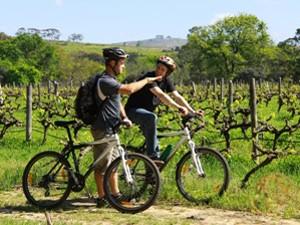 Radtour durch die Weinberge in Südafrika
