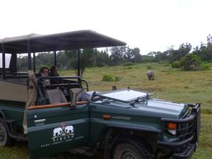 Jeepsafari - auf der Suche nach wilden Tieren