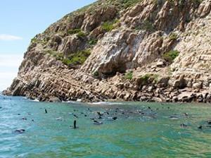 Die Steilküsten des Robberg Nature Reserve