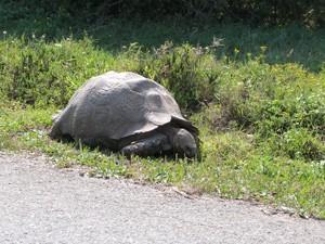 Südafrika - Addo Elephant Park - Schildkröte