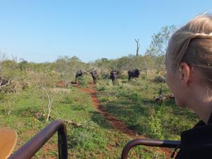 Safari in einem privaten Reservat - Südafrika Rundreise 3 Wochen