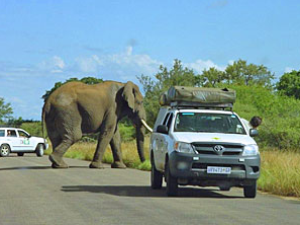 Elefant kreuzt im Hluhluwe Park den Weg