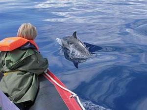 In Mosambik mit Delfinen schwimmen