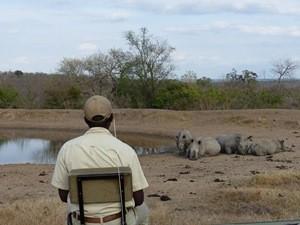 Südafrika-Hoedspruit-Safari-im-privaten-Reservat-Rundreise-3-Wochen