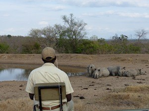Südafrika Rundreise 3 Wochen Hoedspruit Safari