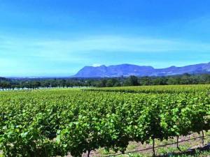 Südafrika Weinregion Weinfelder Fahrradtour