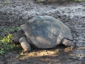 Mauritius Urlaub - Schildkröten