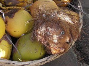 mauritius-kokosnuss-gesicht