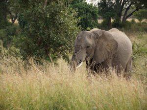 elefant-krueger