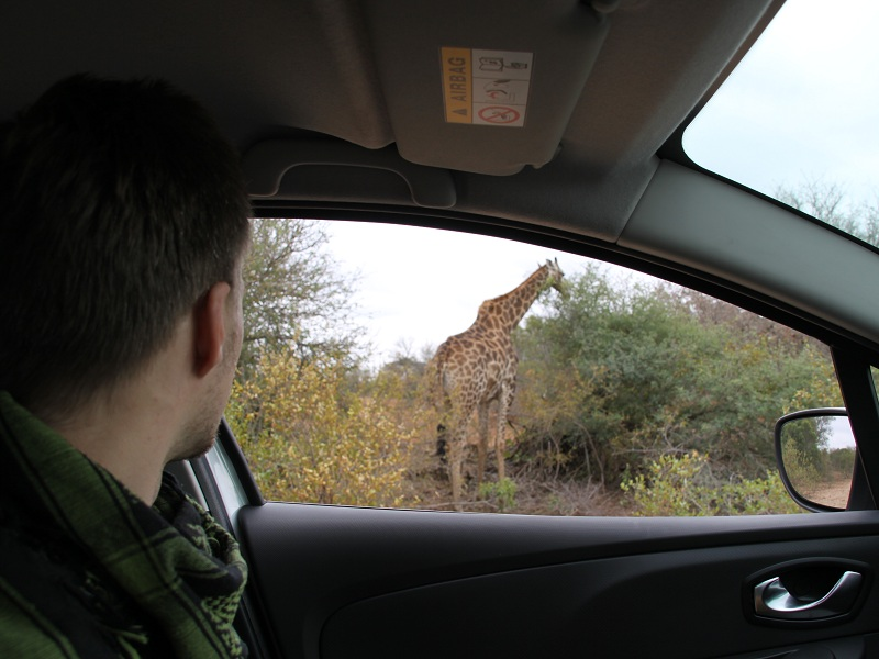 safari-krueger-nationalpark-giraffe