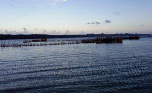 Sonnenuntergang auf dem Kosi Lake mit Schilfrohren