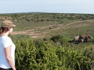 Addo-Elephant-Nationalpark Camper Reise Südafrika