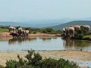 Rundreise Camper Südafrika Addo-Elephant-Nationalpark