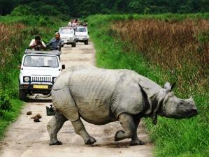 Nashorn während einer Jeep- Safari im Kaziranga Nationalpark