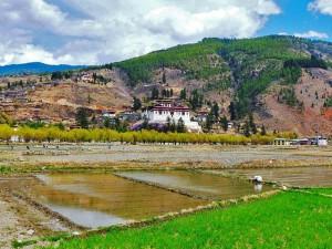 Paro Dzong vor bewässerten Feldern