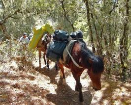 Packpferde mit Reisetaschen und Camping Equipment auf dem Wanderpfad