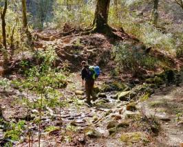 Ein Wanderer überquert einen kleinen Bach im dichten Wald auf dem Bhutan Trekking