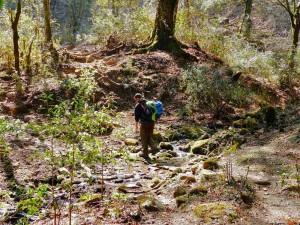 Wanderer Bach Wald Bhutan Trekking