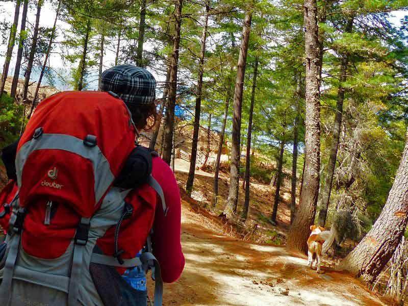 Ein Wanderer beim Trekking in Bhutan wird von einem Hund begleitet.