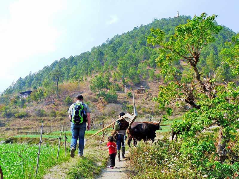 Farmer mit Kind und Ochsen bei den Feldern im Punakha Tal.