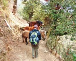 Wanderer und Pferde auf einem Trekkingpfad