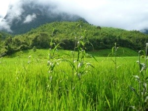 Grüner Berg in den Wolken