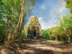 Überwucherter Tempel von Sambor Prei Kuk in Kambodscha