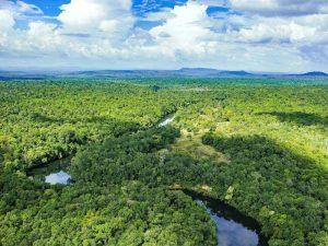 Das Cardamom Tented Camp liegt mitten im dichten Dschungel