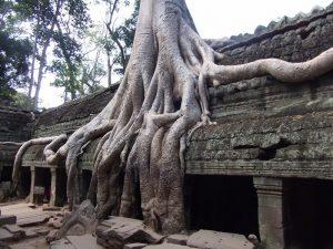 Von Wurzeln überwucherter Tempel in Angkor