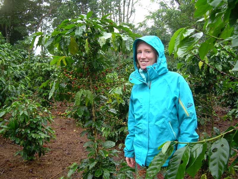 Streifen Sie durch aromatische Kaffeeplantagen