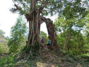 Tempel von Sambor Prei Kuk