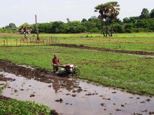 Feldarbeiter in Kambodscha