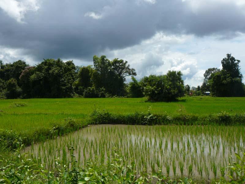 Lernen Sie bei diesem Ausflug mehr über das Grundnahrungsmittel der Laoten